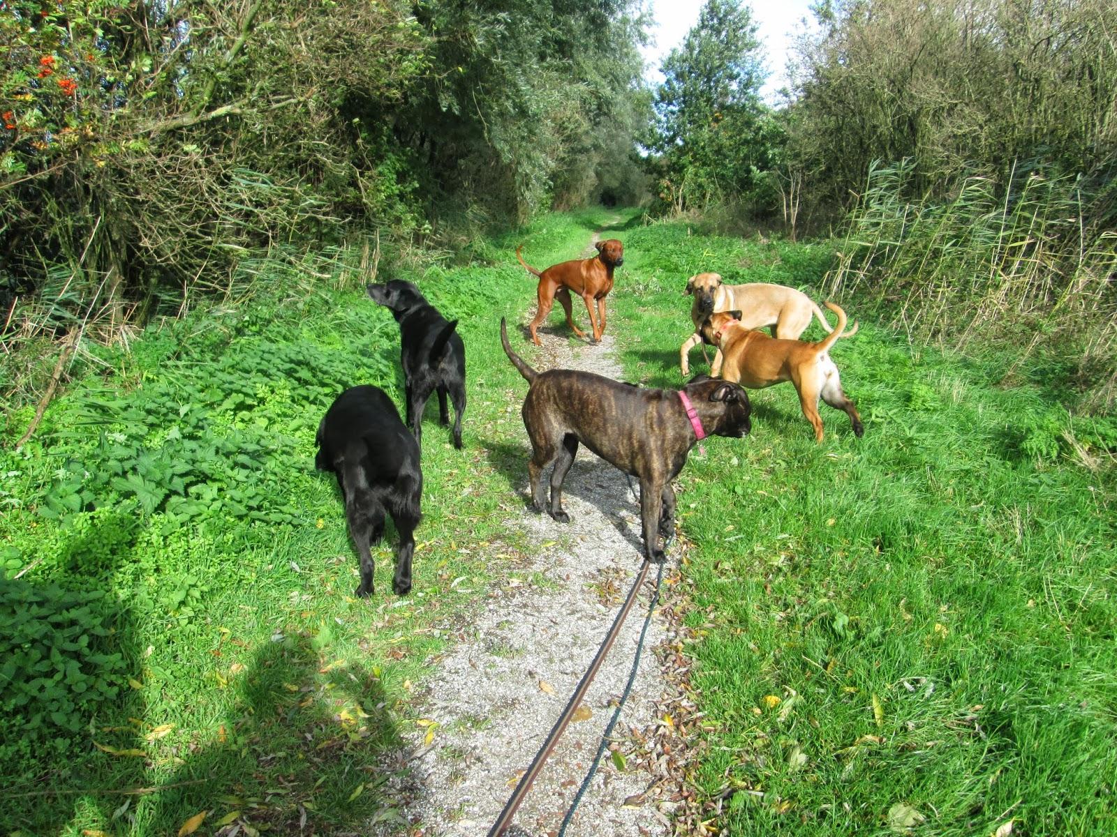 Hondengroep